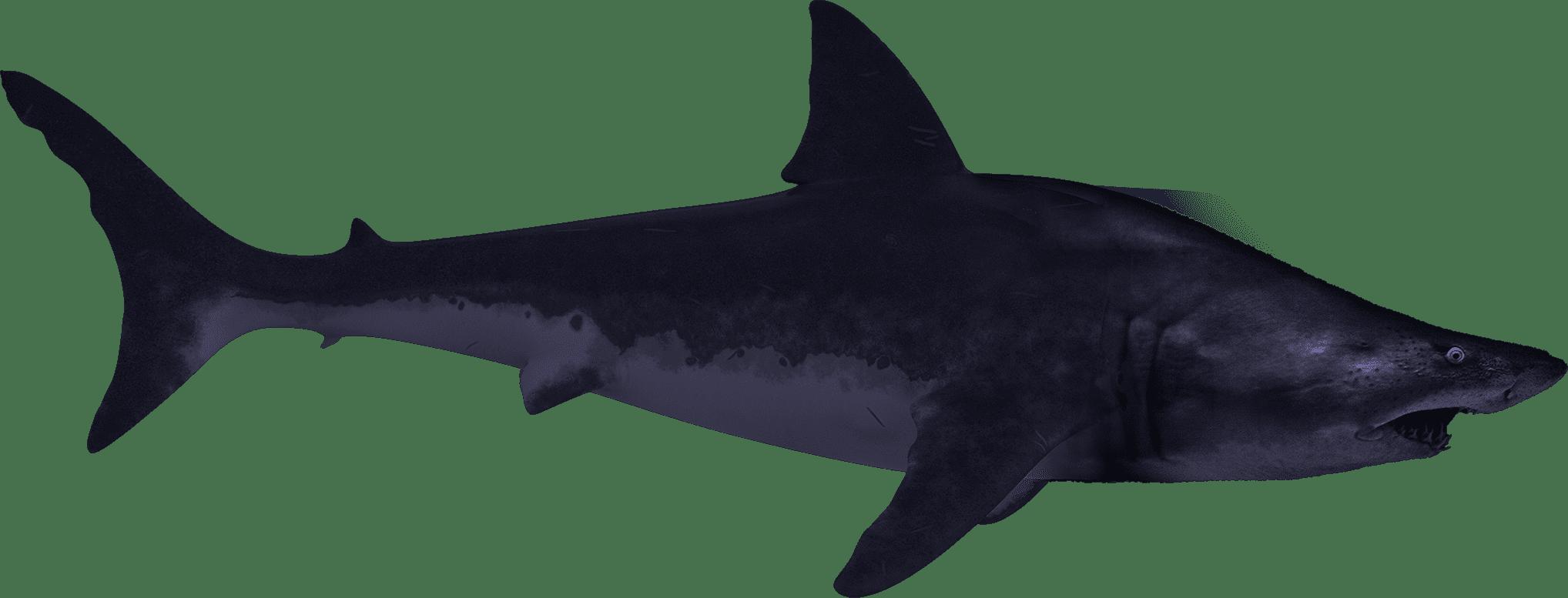 迫りくるサメさん